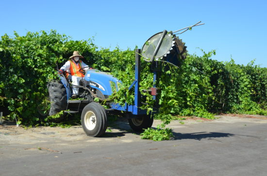 Table grape cane cutting equipment in a vineyard at HMC Farms