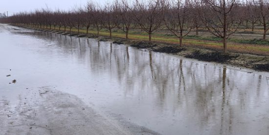 Winter trees with flooding in the foreground